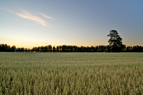 trees tree field barn zeiss suomi finland eos countryside country oats f28 oat ze kesä suonenjoki 21mm carlzeiss kaura pelto canoneos5d aitta oatfield kaurapelto distagont2821 distagon2128ze