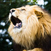 Big Cats Shoot-117.jpg