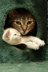 snuggled together   snowball & babykitty