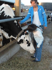 Olivia Petting a Dairy Cow