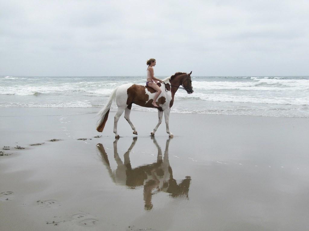 Great Wallpaper Horse Beach - 5925451848_ff6c59462e_b  Pictures_487425.jpg