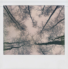 Trees & Sky – Untitled-9_72dpi