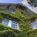 Small photo of Green Facade