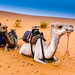 Sitting Camels by Beum Gallery