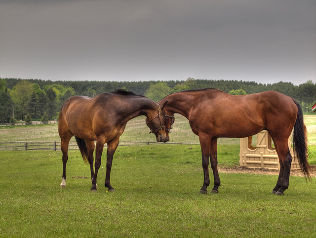 Horses in Caledon, Ontario #2