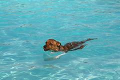 Charlie Swims!