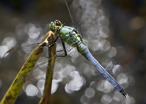 insect nj 371 2011 supershot wawayandastatepark xplr kh0831
