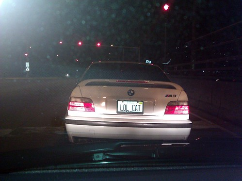 lol cat Illinois plates