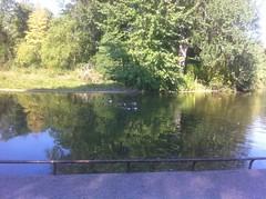 Lac de Saint-Mandé sous le soleil