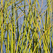 Ormond Beach Wetlands/ Grass 1608.5.j