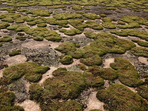 nature finland geotagged europe fin archipelago korpoström inikorp geo:lat=6013004983 geo:lon=2164233150