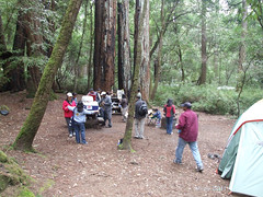 Big Basin Redwoods Park