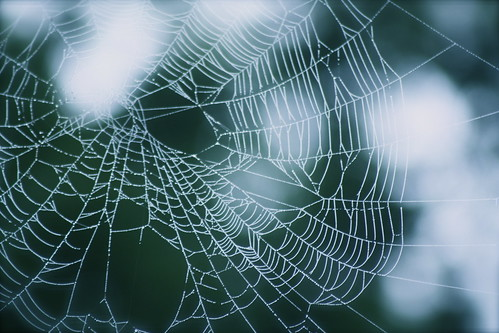 morning water fog dark dawn spider droplets big glow treasure web spin foggy stretch sleepy dew string bead stick heavy