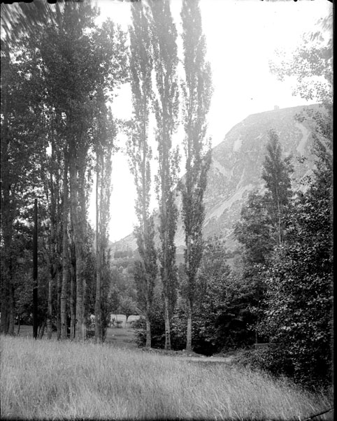 Rangée de peupliers, Saurat, Ariège