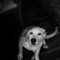 blur dog
