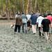 Mangrove Walk Through Mud - Sundarbans, Bangladesh