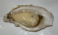 molluscs(0.0), animal(1.0), clam(1.0), shellfish(1.0), oyster(1.0), seafood(1.0), invertebrate(1.0), food(1.0), clams, oysters, mussels and scallops(1.0),