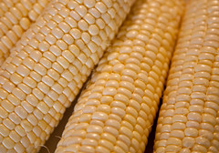 dish(0.0), sweet corn(1.0), food grain(1.0), corn kernels(1.0), vegetarian food(1.0), maize(1.0), corn on the cob(1.0), food(1.0), corn on the cob(1.0), cuisine(1.0),