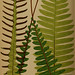 Ferns: British and exotic v.4