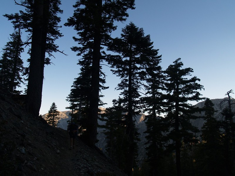 Morning on the Trail. Early morning silhouette of pine trees on the Kelly Camp Trail. Mount Baldy is lit in the background.