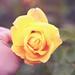 200 | 365 [explored] by empress jacqueline ♛♫