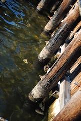 Protección de la madera contra agentes bióticos