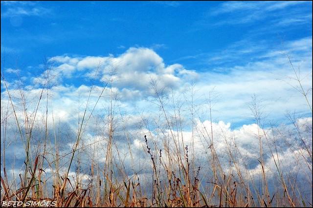 wallpaper natural flickr photo sharing