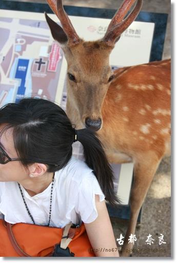 20110711_4thDay Nara_2504 f