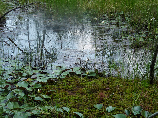 The team encounters a bog deep in the New Jersey wilderness. Photo by Lauren Deutsch.