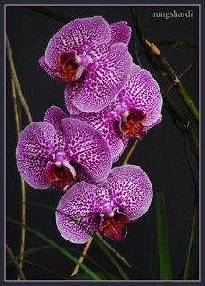 another real orchid
