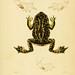 Erpétologie générale, ou, Histoire naturelle complète des reptiles