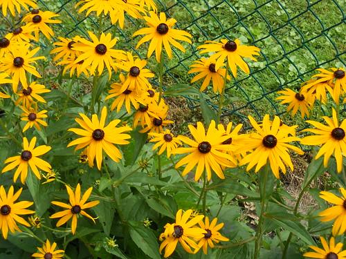 4 Août 2011  DSCN6559 by Diane G....