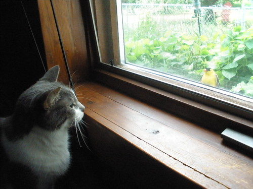 Eenie and Goldfinch