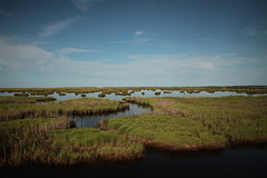 wetland, swamp, horizon, polder, cloud, nature, loch, natural environment, reflection, morning, landscape, wilderness, salt marsh, rural area, sky, bog,