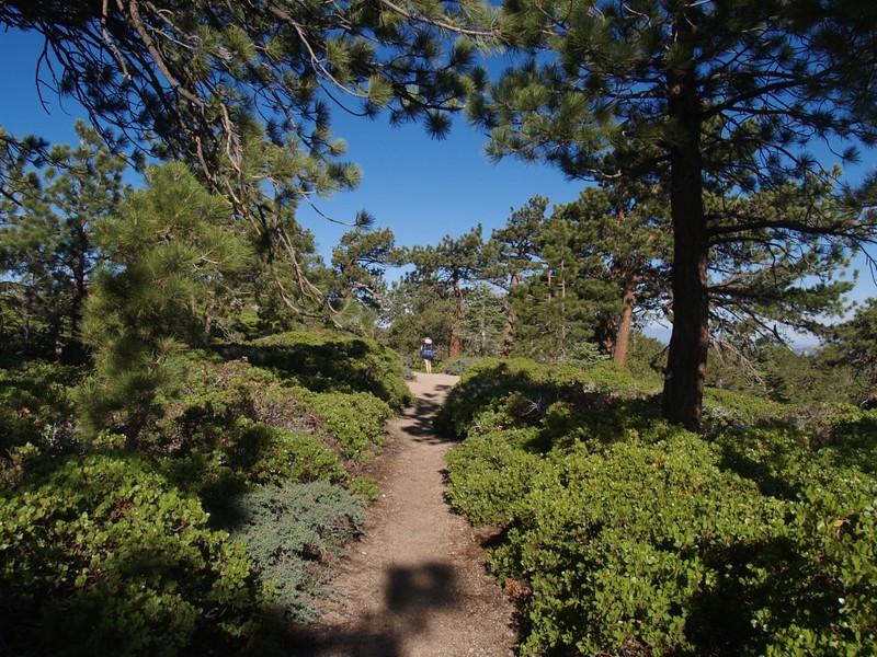 San Bernardino Peak Trail