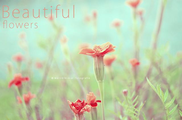 Beautiful flowers ...