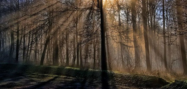 Sunbeams in the Forest.
