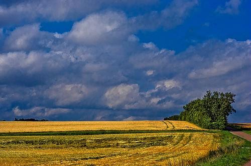 summer nature clouds landscape denmark corn cornfield pentax m42 dänemark industar kx landskab nordjylland