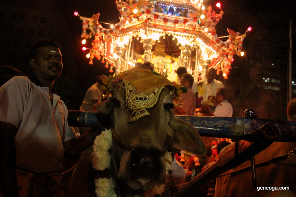 The Cow pulling The Silver Chariot