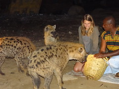 cheetah(0.0), zoo(0.0), wildlife(0.0), animal(1.0), mammal(1.0), hyena(1.0), fauna(1.0), safari(1.0),