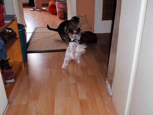 Kater trifft Hund