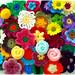 Florindo o inverno by Lidia Luz