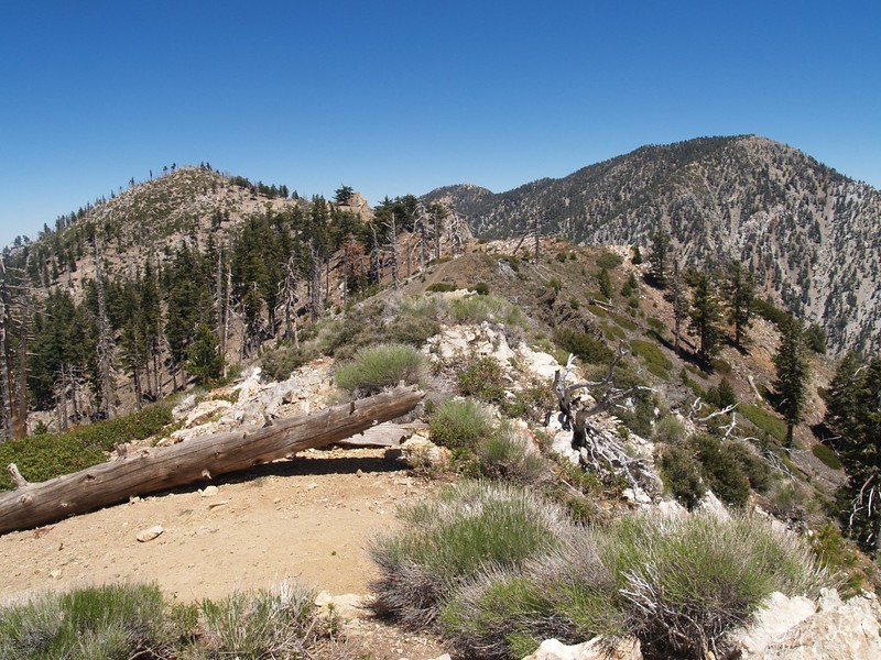 Bighorn Peak Trail, with Bighorn peak on the left and Cucamonga Peak on the right