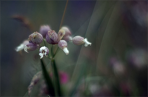 ................mystic bokeh jungle................