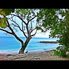 #barbados #beach #nature #green #iphoneography #trees