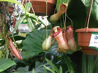 Exhibition of Carnivorous Plants, Quito