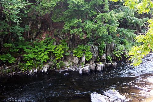 mainebigwilsonstreamrocks fernsforest