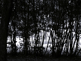 (203/365) Hedge