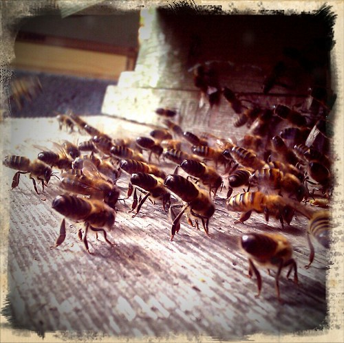 Fanning Bees