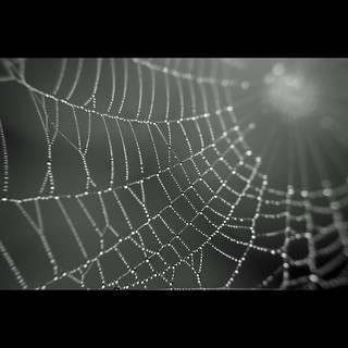 Droplets on spider web #2
